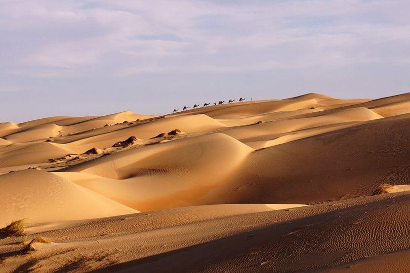 Adrar - Dromaires au sommet des dunes