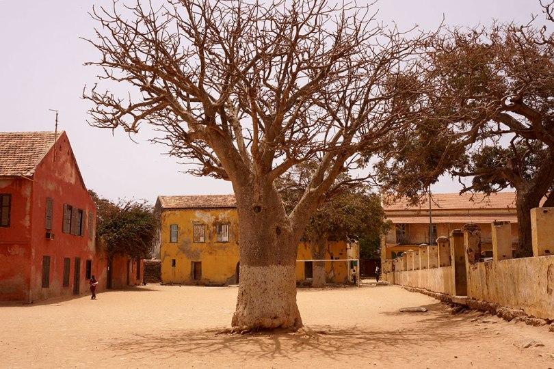 Gorée - Baobab au milieu du terrain de foot