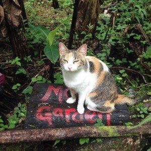 Moon Garden Cat in Hawaii
