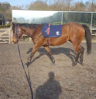 Lunging Olly