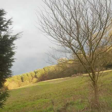Woodland Outlook