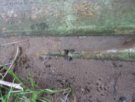 Otterlosung (alt) auf dem Fundamentabsatz (wie vor) - Foto: Gerd Tersluisen