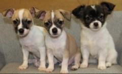 Puppies CARE
