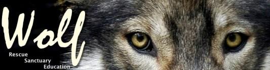 Wolf logo horizontal