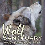 Wolf logo small-web