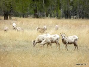 wildlife near St. Elmo, Colorado. HeidiTown.com