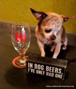 Harley at City Star dog beers high res