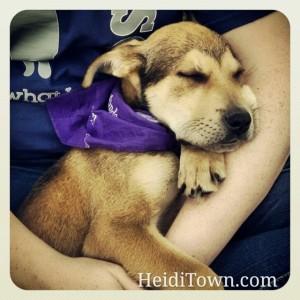 Ruff Start Rescue & Training at Berthoud Day in Berthoud, Colorado. HeidiTown.com
