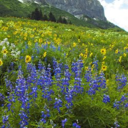 Crested Butte Wildflower Festival. Gothic Mountain photo by Doug Beezley