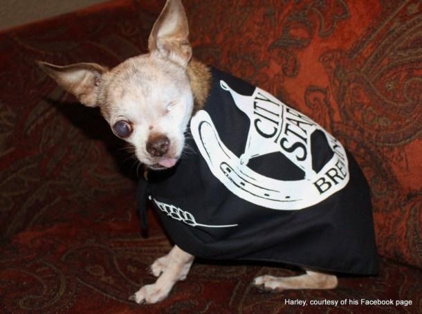 Harley, the name sake of Hops & Harley in Berthoud, Colorado. HeidiTown Gives Back