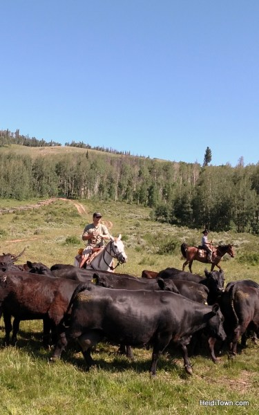 Cow Cutting and Cattle Drive at Latigo Ranch. HeidiTown.com
