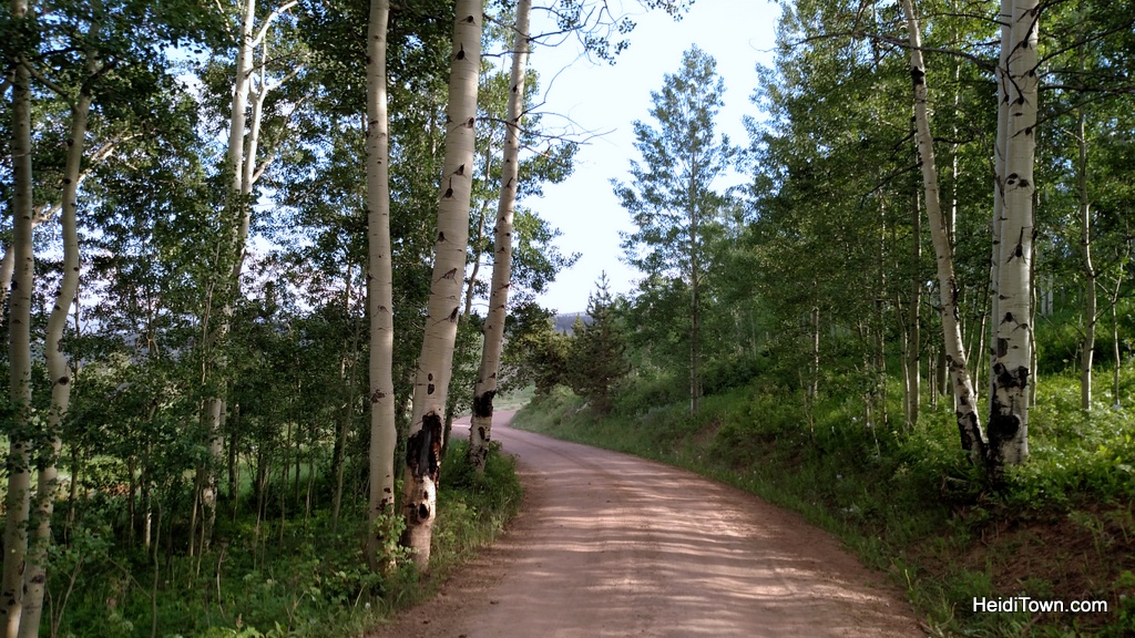 Latigo Ranch. Road through the aspens. HeidiTown.com