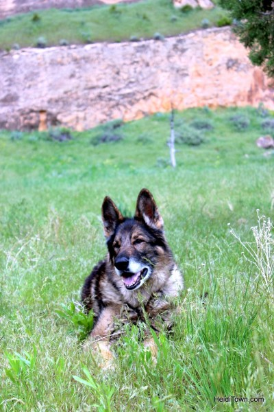 Camping at Echo Park in Dinosaur National Monument. A very happy German Shepherd. HeidiTown.com