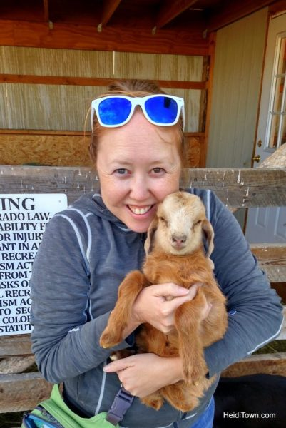 Girlfriends Getaway in the Colorado Rocky Mountains. Horse & Hen baby goat. HeidiTown.com