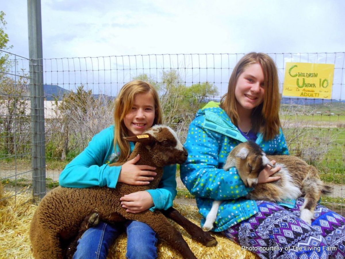 Kids bored this summer Let HeidiTown help. The living Farm, Paonia, Colorado. HeidiTown.com