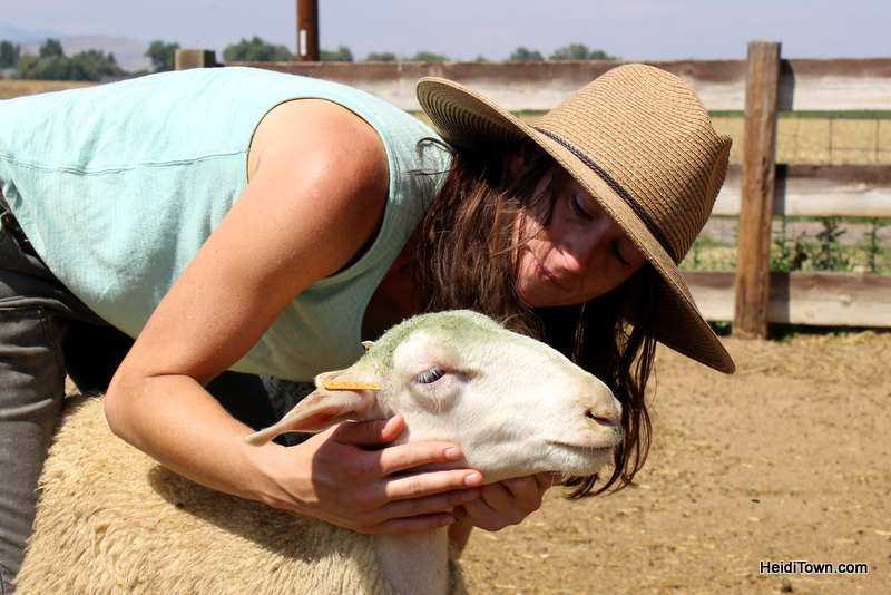 SkyPilot Farm & Creamery, Chloe & Heidi the Sheep. HeidiTown.com