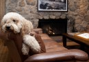 Dog-Friendly Hotels in Your Favorite Colorado Destinations Molly Gibson Barclay