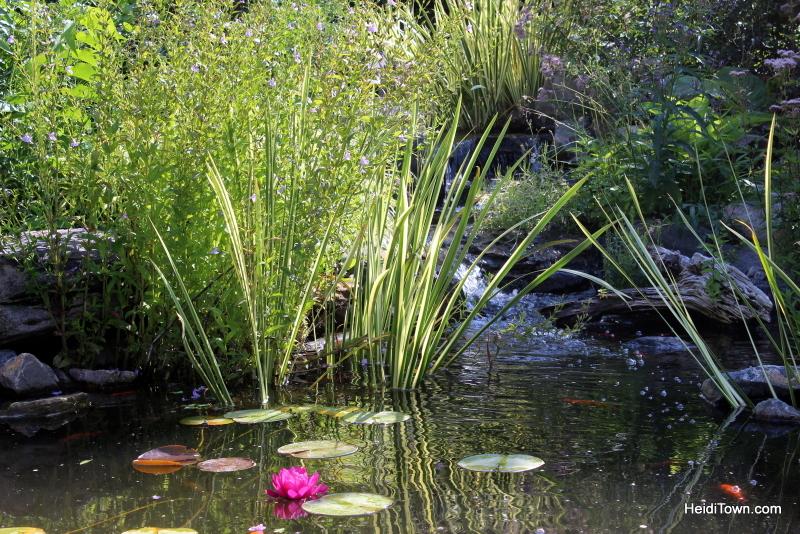 Shooting All the Flowers at Denver Botanic Gardens (12)