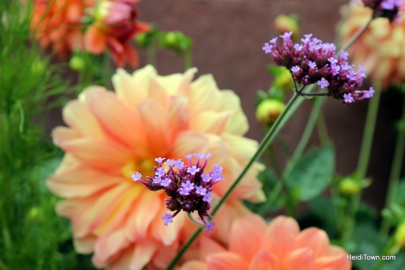 Shooting All the Flowers at Denver Botanic Gardens (7)