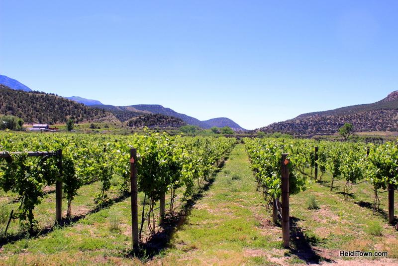 Take Road G to Wine Paradise, Guy Drew Vineyards 0