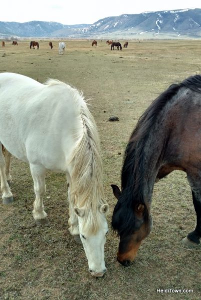 Visit 350 Wild Horses at Deerwood Ranch in Wyoming. HeidiTown 3