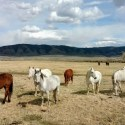 Visit 350 Wild Horses at Deerwood Ranch in Wyoming. HeidiTown 8
