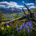 5 Picture Perfect Colorado Summer Towns HeidiTown Photo by KathrynLair_LastDollarRoad
