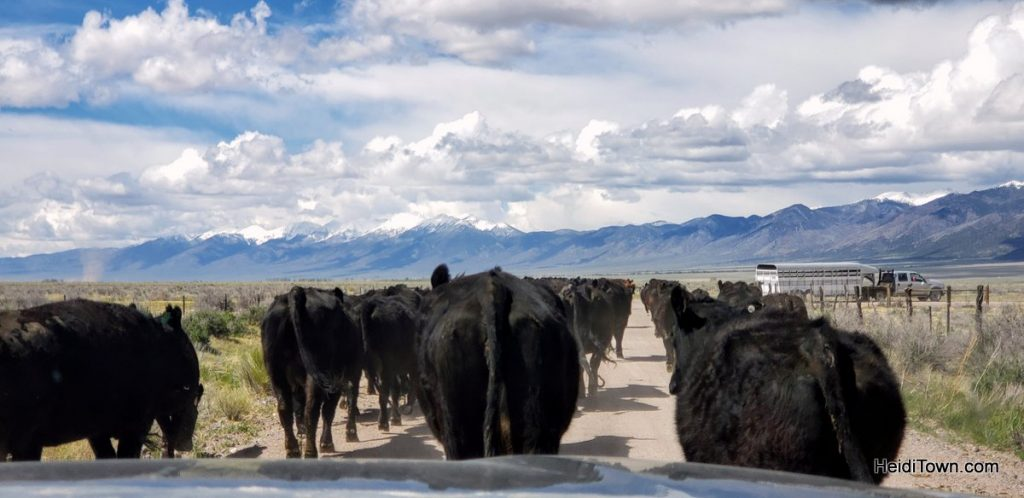 2019, A Year I'd Rather Forget, But… HeidiTown (San Luis Valley, Colorado)