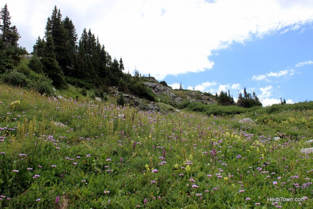 The Snowy Range in Living Color Wildflowers in Wyoming. HeidiTown (17)