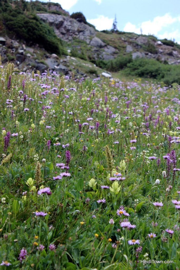 The Snowy Range in Living Color Wildflowers in Wyoming. HeidiTown (18)