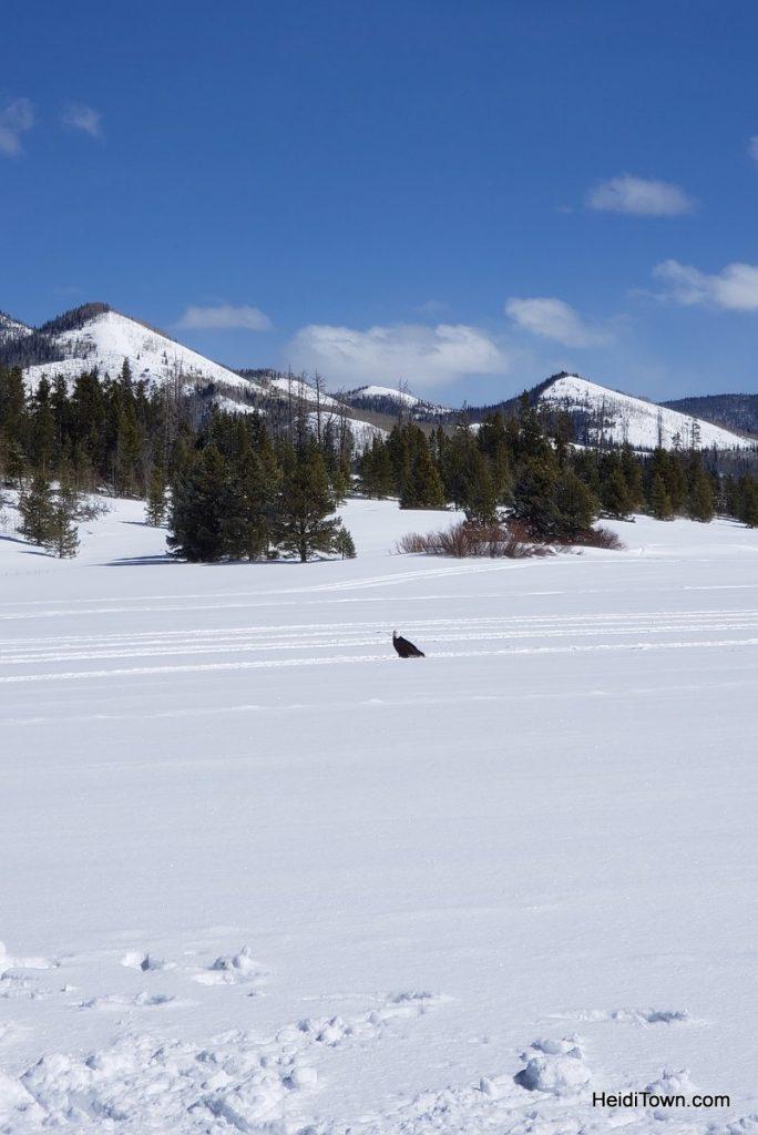 Archery, Ice Fishing & Snoga at Vista Verde Ranch in Colorado. HeidiTown (12)