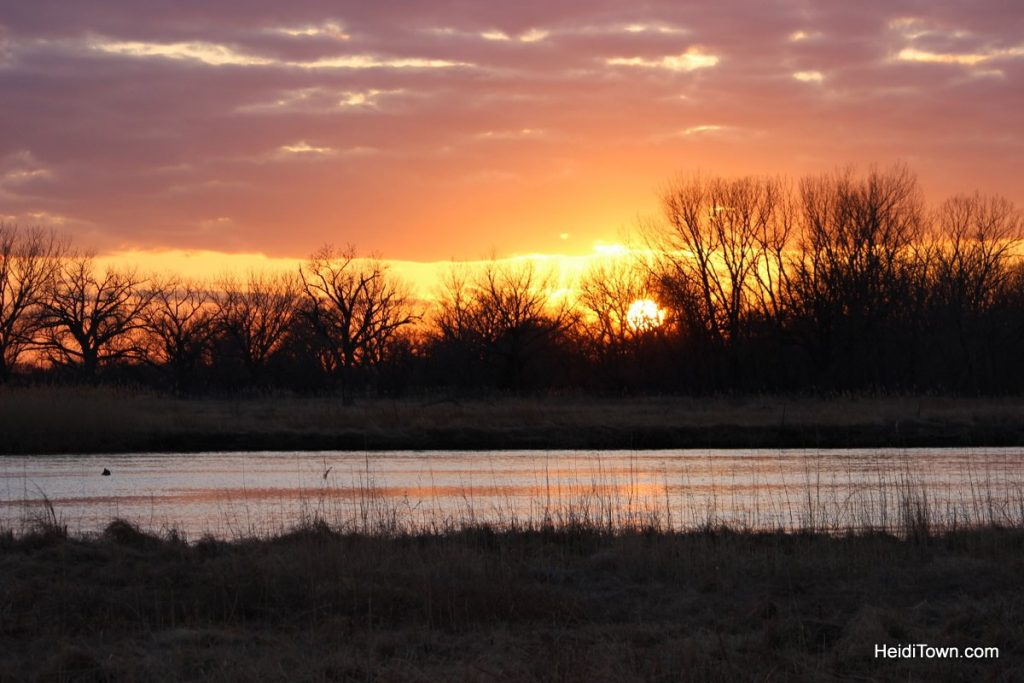 Commune with Nature Birds in North Platte with Dusty Trails. HeidiTown (4)