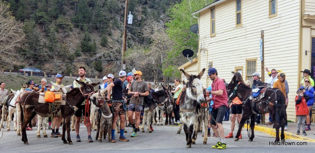 Burro Racing in Idaho Springs, Colorado Race Your Ass Off. HeidiTown (5)