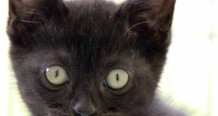 Explore black kittens white cats; can you give any of them a home? 3