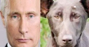 Dog looking like Russian president secret service agents killed the dog 14