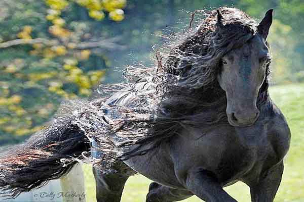 Popular top 10 beautiful horses latest ranked list handsome breeds in the World.