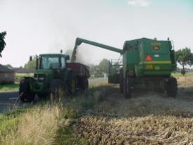 De tarwekorrels worden gelost in de aanhangwagen, hierna gaan ze naar de meelfabriek.