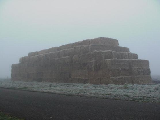 geen dagelijks gezicht in Leendertrijp: een huis van stro doemt op in de mist