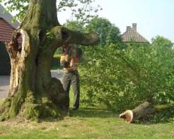 3 boom zagen erik van asten leende