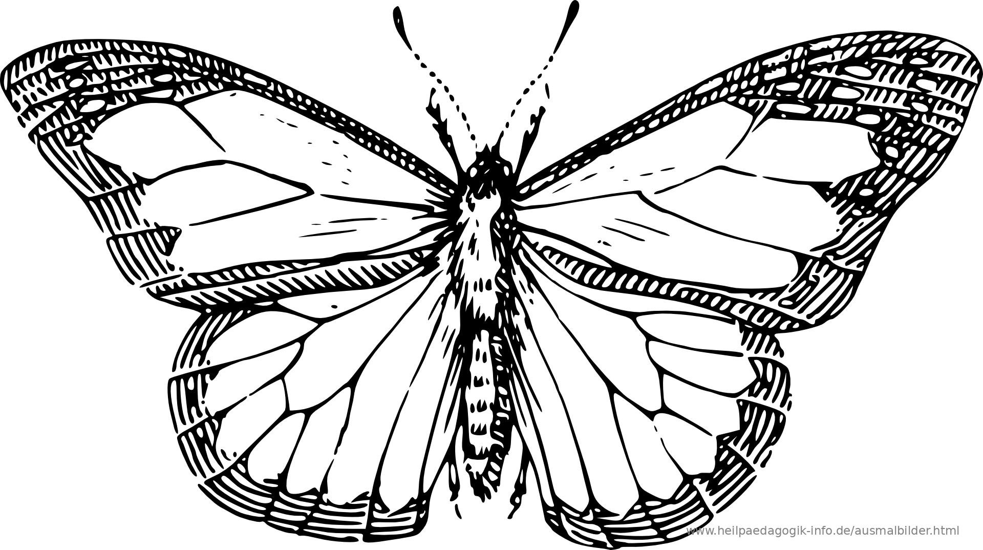 A Black Wing