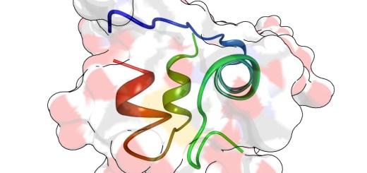 Insulinstruktur - von Anmoll - wikimedia-commons