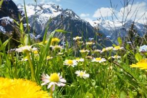 Allergien, Heuschnupfen, Unverträglichkeiten