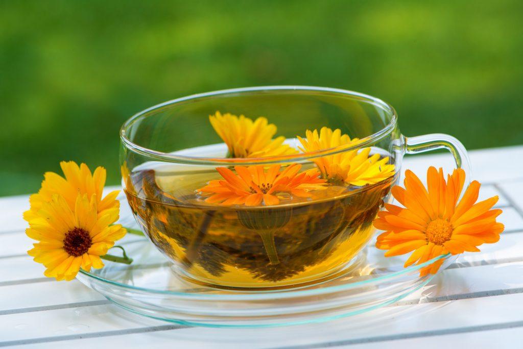 Die Ringelblume stellt für viele Heilpraktiker eine der wichtigsten Heilpflanzen überhaupt dar. Ein Aufguss mit der Blume eignet sich sehr gut für einen Umschlag gegen Krampfadern. (Bild: DoraZett/fotolia.com)