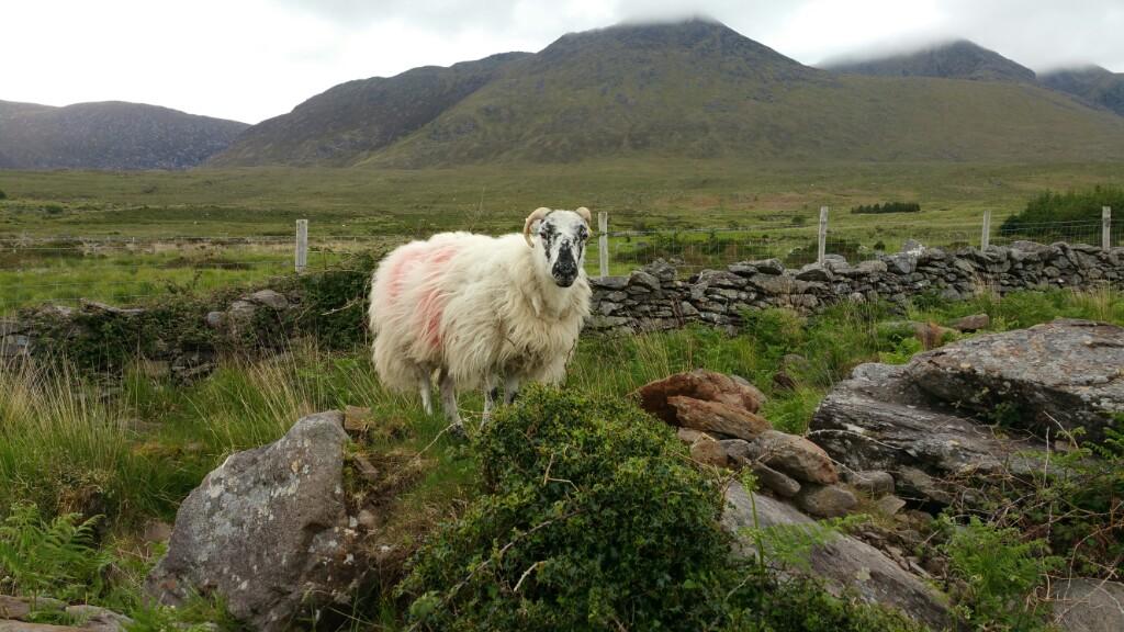 Tag 2 Irland - Killarney - Der höchsten Berg Irlands - Carrauntoohil