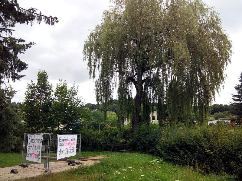 Trauerweide in Walter-Wieland-Hain