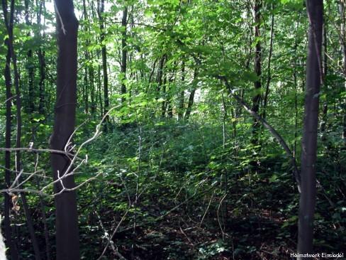 Unterholz beim ehemaligen Waldesrauschen Einsiedel August 2004