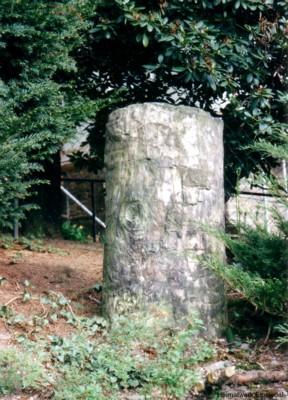Steinerner Baum Anton-Herrmann-Str. 9