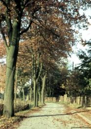 Herbst an der Eibenberger Straße