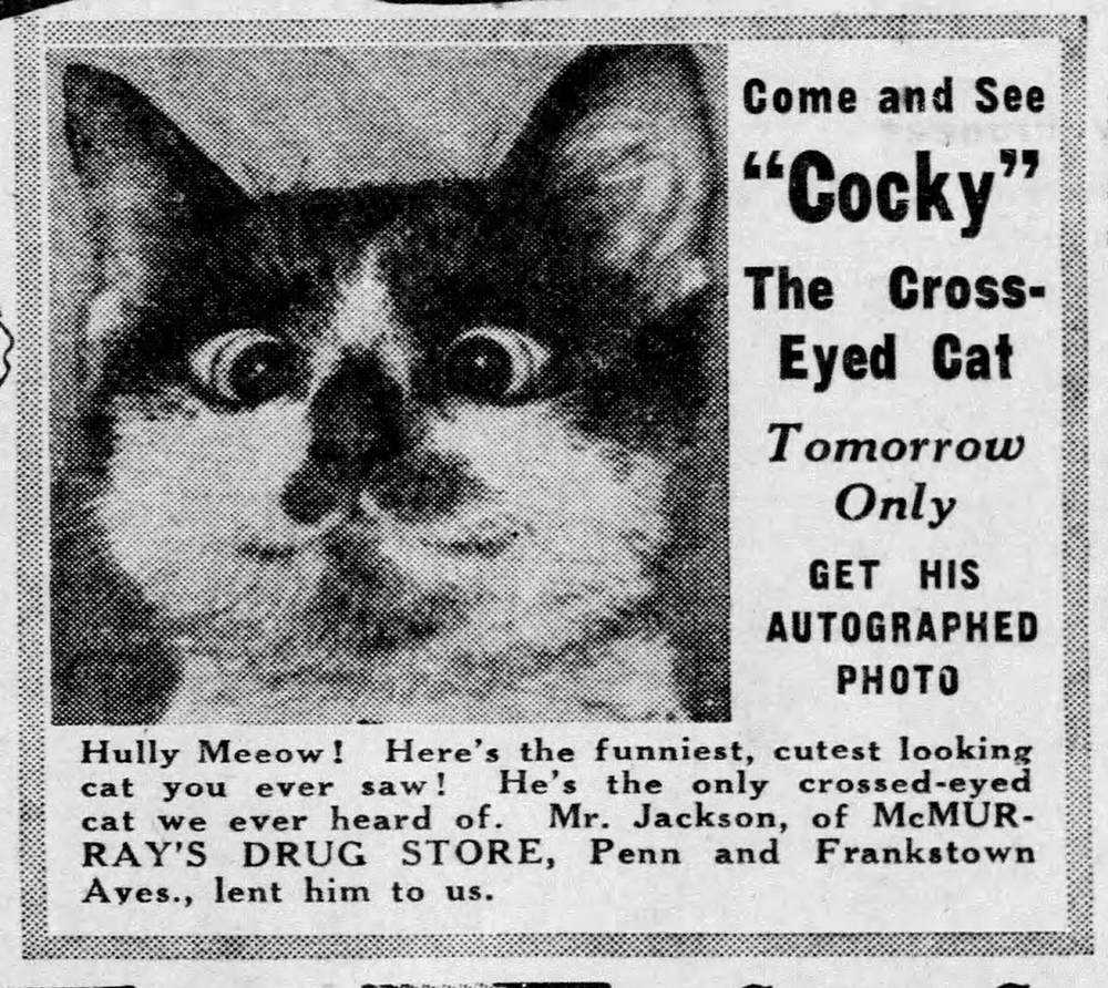 """""""Cocky"""" the cross-eyed cat became a minor Pittsburgh celebrity in the 1940s. Pittsburgh Press, Friday, June 21, 1940."""
