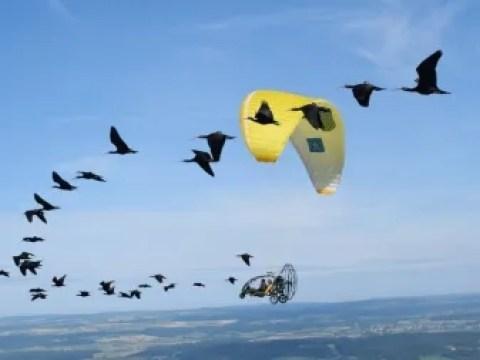 Kraftsparende Choreographie: Wie Zugvögel migrieren